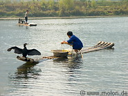 Cormorant fishing photo gallery  - 10 pictures of Cormorant fishing