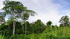 17 Rainforest and treetops