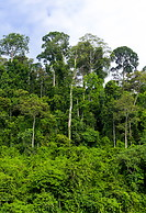 20 Tropical rainforest