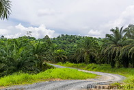 04 Gravel road across oil palm plantation
