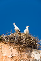 13 Stork couple in nest