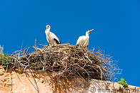 14 Stork couple in nest