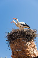 15 Stork couple in nest